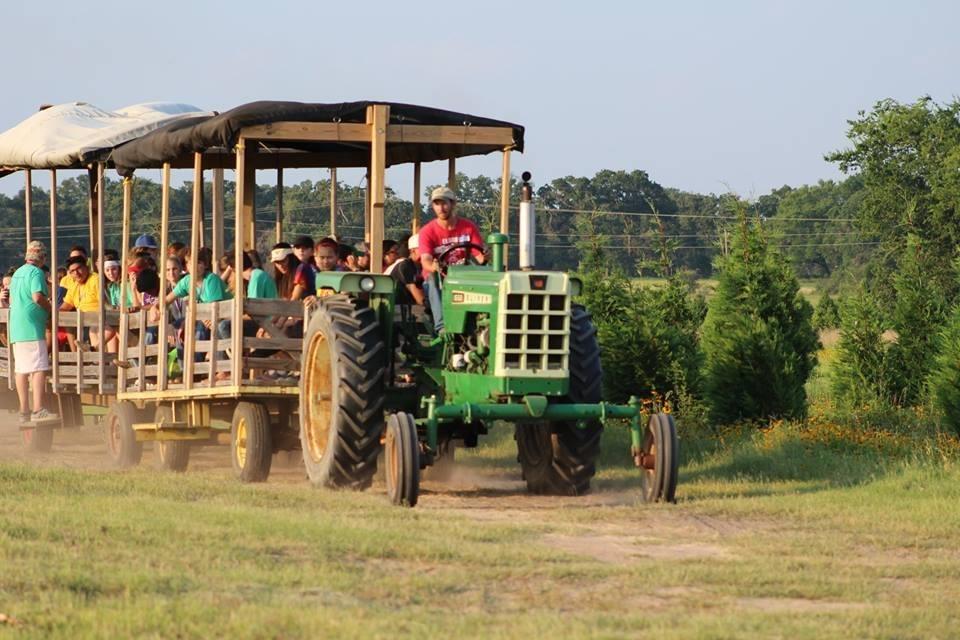 Latest Reviews - Elgin Christmas Tree Farm Pumpkin Festival - Elgin, TX