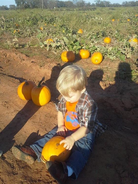 Grider farm pumpkin patch stillwater, oklahoma urban farm.