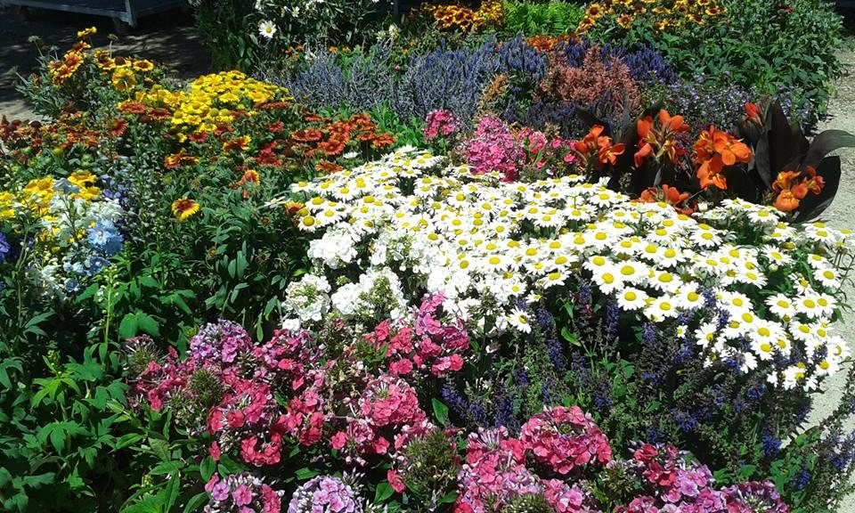 ... Shrubs, And Plants For All Of Your Landscape And Gardening Needs. Holly  Acres Is Located On Hwy 86 Just One Mile East Of The Wonderful Town Of  Elizabeth ...