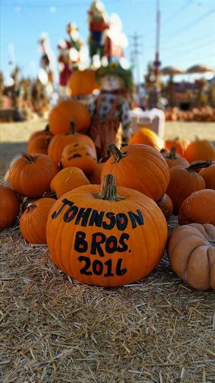 Johnson brothers pumpkin patch yelp