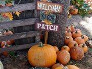 Grider farm pumpkin patch perkins, ok.