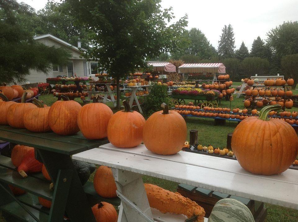 Lancaster ohio pumpkin patch.