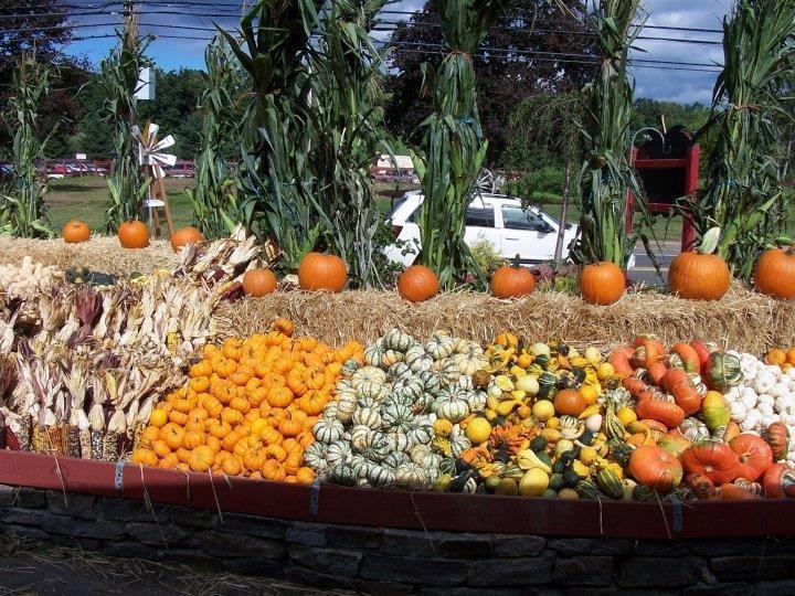 Best Pumpkin Patch Long Island