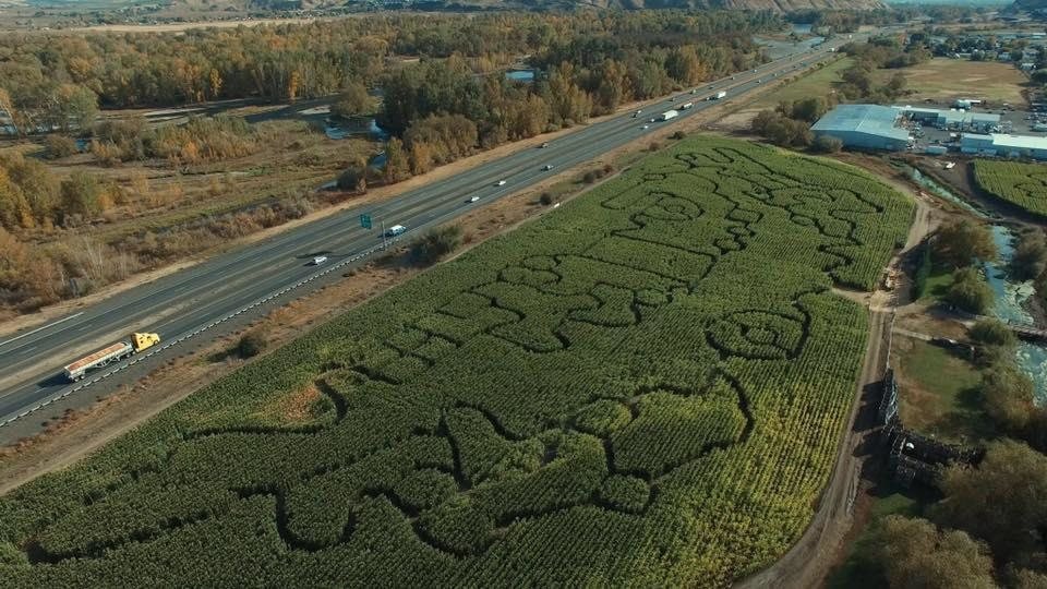 How to Use a Corn Maze to Market a Farm pics